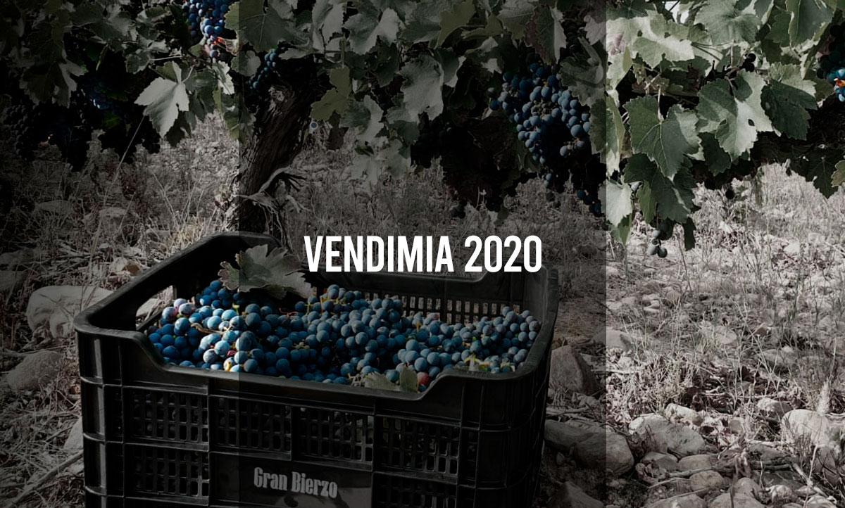 Vendimia 2020